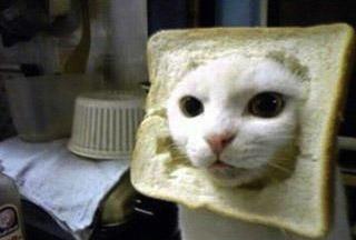 食パンと猫
