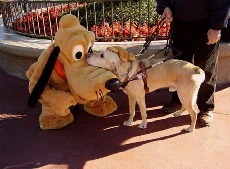 プルートと盲導犬