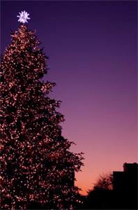 夕暮れのツリー