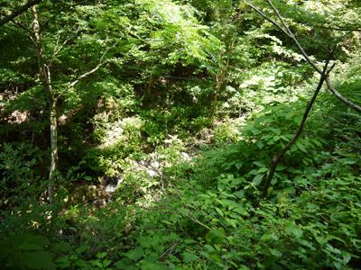 聖霊の森1