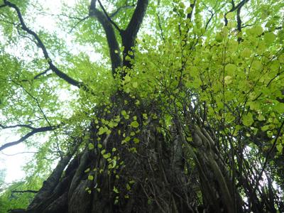 聖霊の森2