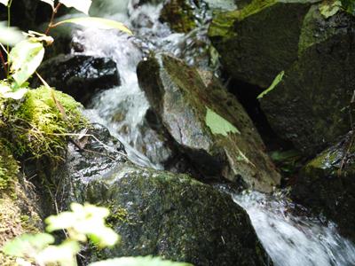 聖霊の森3