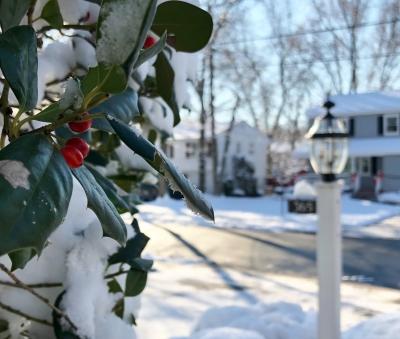 雪 柊 白 赤い実 クリスマス 冬 朝