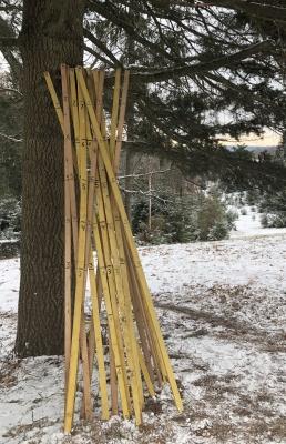 クリスマスツリー ダグラス アメリカ ファーム ニュージャージー 雪 カット 高さ ものさし