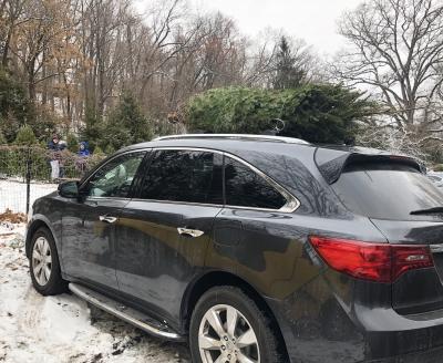 クリスマスツリー ダグラス アメリカ ファーム ニュージャージー 雪 カット 持ち運び 車 高速道路