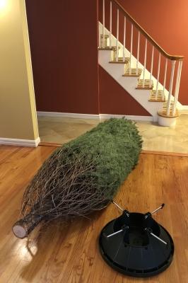 クリスマスツリー ダグラス アメリカ ファーム ニュージャージー 雪 カット スタンド 水