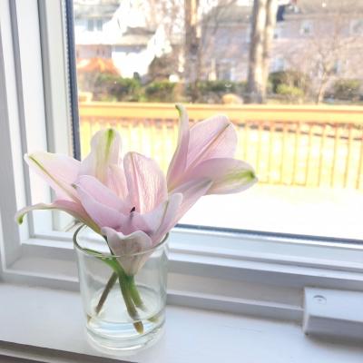 百合 ピンク色 グラス 窓辺 三月 lily pink window march