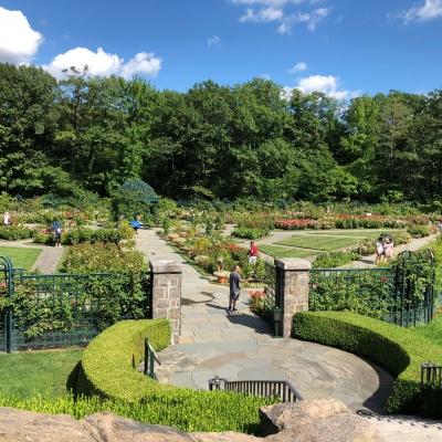 ニューヨーク ボタニカル ガーデン ローズガーデン 夏 バラ 庭 ガーデンデザイン Peggy Rockefeller Rose Garden new york botanical garden design rose