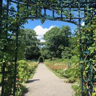 ニューヨーク ボタニカルガーデン ローズガーデン ブロンクス マンハッタン 植物園  バラ園 ガーデンデザイン new york botanical garden rose bronx design manhattan garden fondly