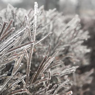 雨氷 木 樹木 氷 寒い アメリカ ニュージャージー州 冬 glaze ice New Jersey us winter garden fondly