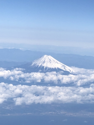 富士山 日本一 雪山 高山植物 Mt. Fuji highest mountain Japan alpine plants garden fondly