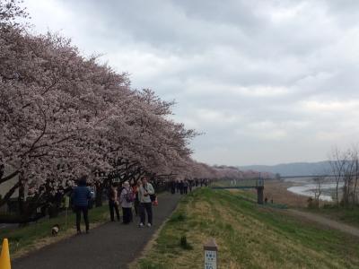 2016_spring