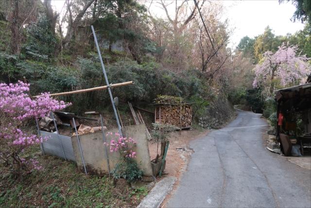 京大坂道の画像 p1_36