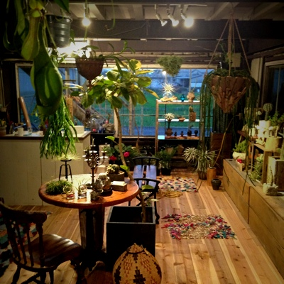 植物エアープランツサボテン