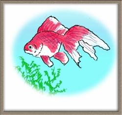 夏の風物詩水槽の中の金魚