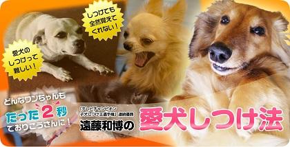 犬の調教 噛む癖の治し方−しつけの仕方−
