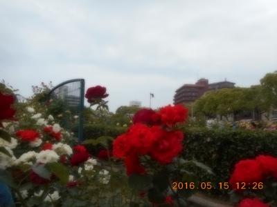 福山バラ祭り