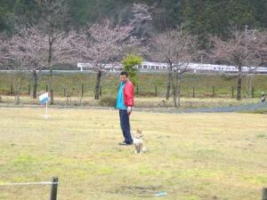 桜と工人とわん