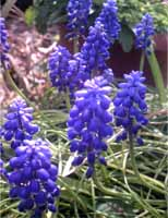 flower(open)