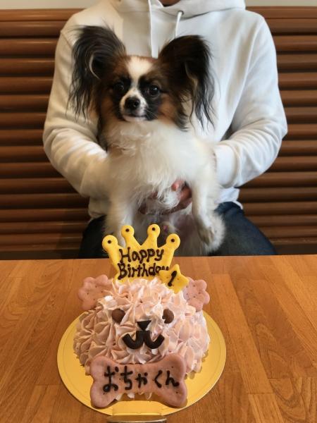 Resultado de imagen para 犬 Papillon  お誕生日おめでとう