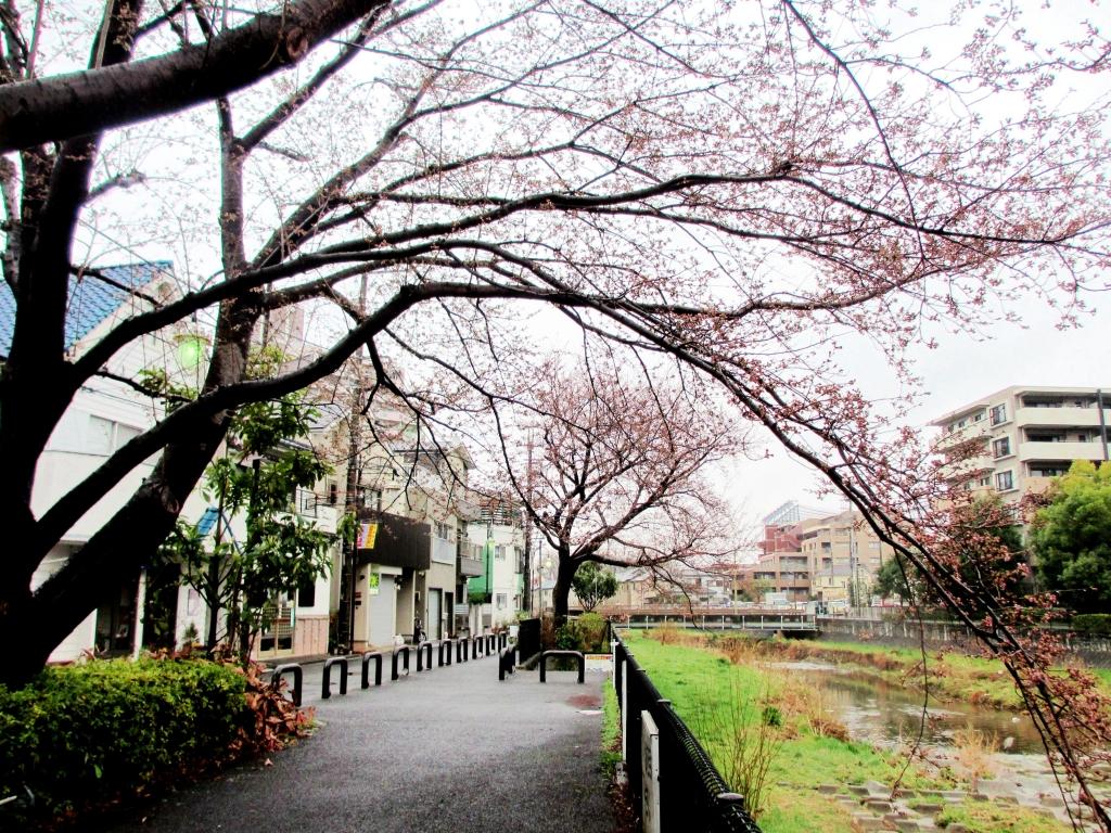 赤く色ずく桜の木
