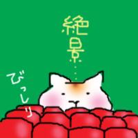 さくらんぼ 猫 日記