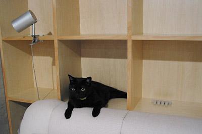 黒猫写真ブログ