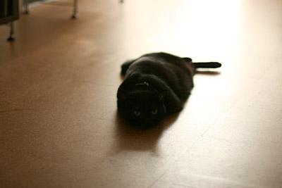 ヒグマ黒猫