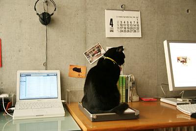 黒猫2006