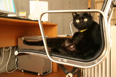 猫写真ブログ
