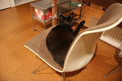 黒猫ブログ