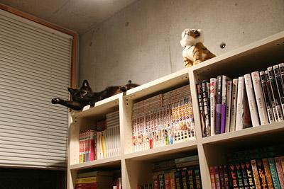 黒猫ヒグマ