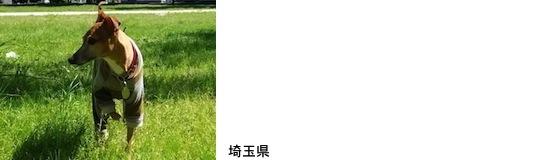 sugita201656.jpg