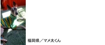 uemori2016514.jpg