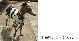 suzuki2017520.JPG