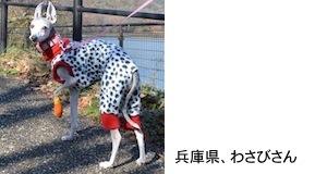 sezaki2017125.jpg