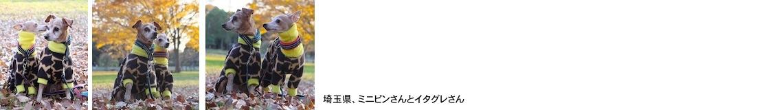 koyama20171210.JPG