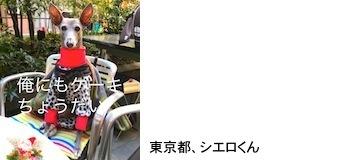 furikawa20171215.JPG