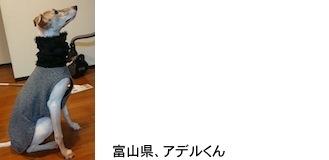 kageyama20171215.JPG