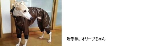 kikuti20171225.JPG