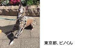 yamanoi201815.jpg