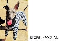 kamei2018320.jpg