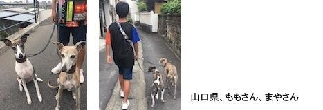 ozzawa2018525.jpg
