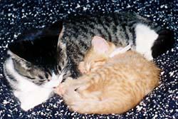 060222-ウエンディ&タイガー