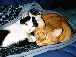 060222-タイガー&リサ