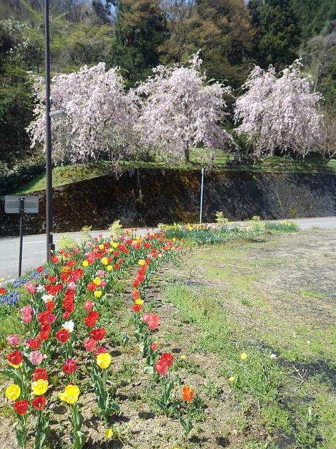 daigakubo