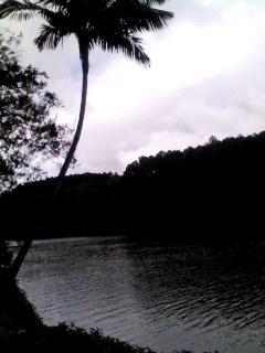 世界最古の熱帯雨林に囲まれた村Kurandaを流れるBaron RIver