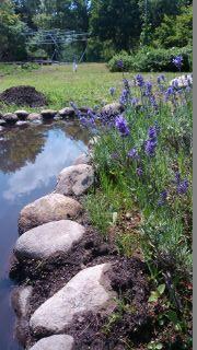 good-bye-Lavender