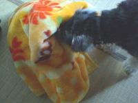 おさがりの毛布