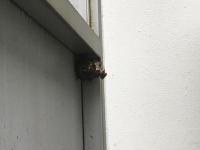 蜂の巣駆除前.jpg